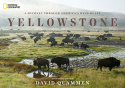 YELLOWSTONE cover250
